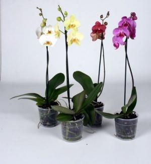 Картинки по запросу Выращивание орхидей